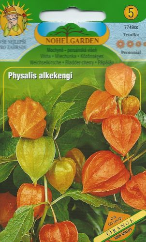 Physalis alkekengi ORANGE