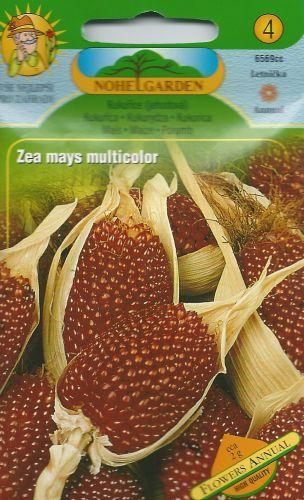 Zea mays - JAHODOVÁ