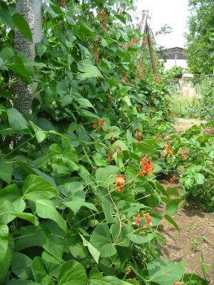 zahrada-pre-oddych-06