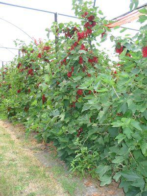 zahrada-v-juni-04